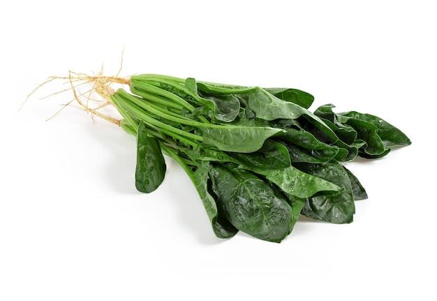 시금치 지점과 흰색 표면에 고립 된 녹색 잎.