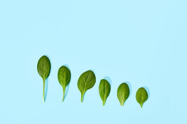부드러운 파란색 배경에 고립 시금치 잎입니다. 신선한 녹색 시금치, 평면도. 큰 것에서 작은 것까지