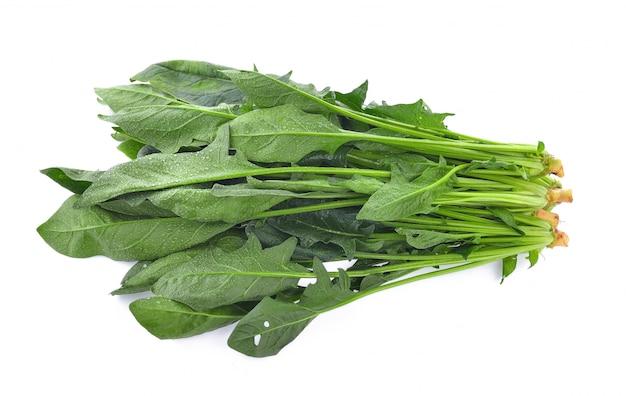 시금치 잎 흰색 표면에 고립