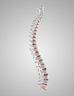 Spinal cord with red details