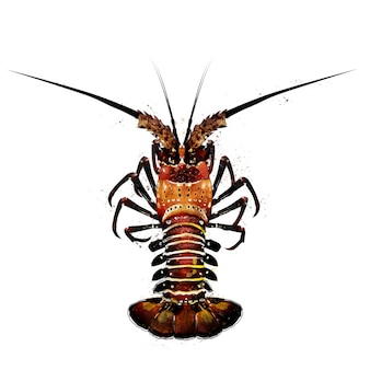 Spiny lobster, watercolor isolated illustration of a crustacean.