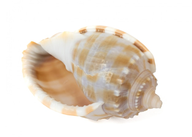 Spiral seashell isolated on white