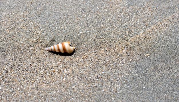 바다 해변에서 모래 땅에 나선형 조개
