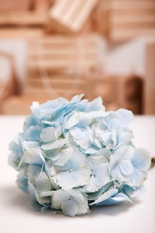 Splendid light blue hydrangea on white table and wooden boxes background. floristics workshop, floral arrangement for presents, tenderness in interior and decoration concept