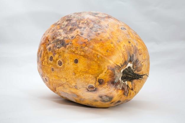 甘やかされて育ったカボチャが横になっている汚れやカビに覆われて乾燥してしまう危険な食品の問題