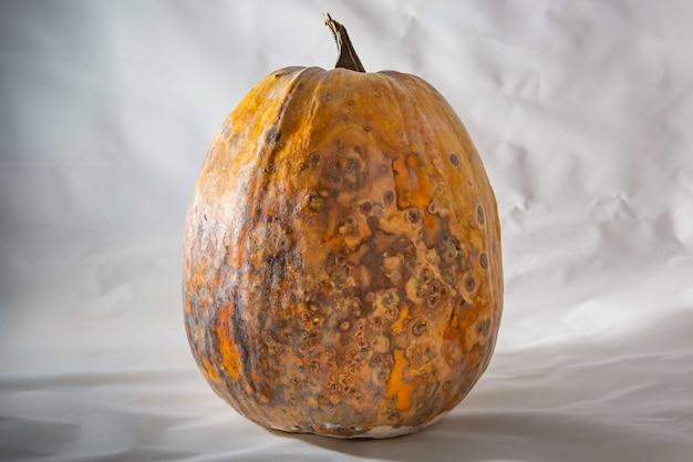 甘やかされて育った野菜青白い背景の乾燥した腐った乾燥したカボチャ危険な食品