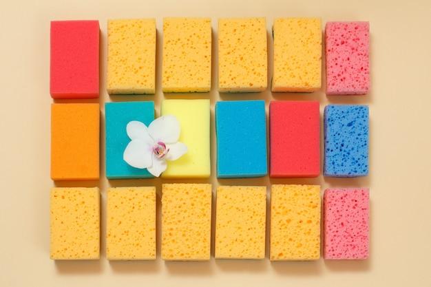 베이지 색 표면에 난초 꽃의 꽃 봉오리와 다른 색상의 스폰지