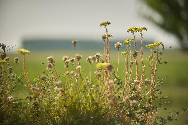 自然の真ん中で自発的な草や野花