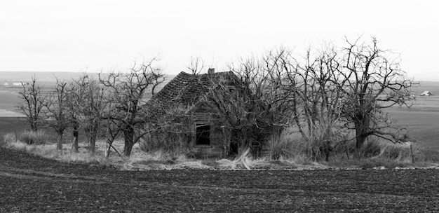Spooky abandoned house in field surrounded by dead trees