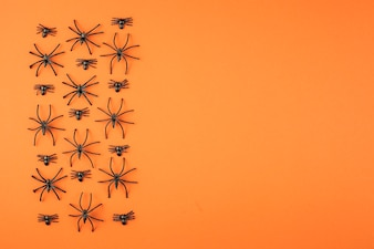 Spooky group of spiders