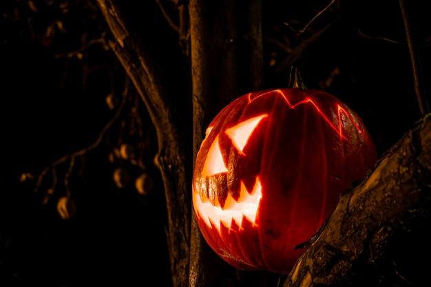 Жуткий хэллоуин тыквенный фонарь на старом дереве ночью в темноте