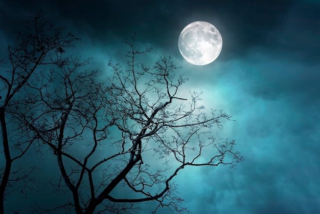 Spooky night forest with moon and moonlight, misty foggy forest