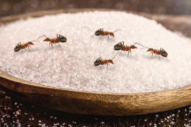多くの赤い蟻が乗っている砂糖のスプーン、屋内の昆虫、侵入または害虫の危険性