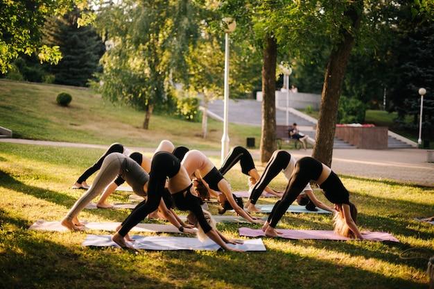 スポーティな女性がヨガを練習し、下向きの犬のエクササイズ、adho mukhasvanasanaポーズでストレッチしています。人々のグループは、緑の芝生でヨガマットの上で下向きの犬のポーズをヨガのポーズをしています