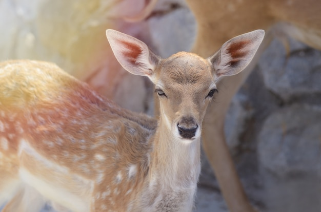 Spotted baby fawn under summer sunlight