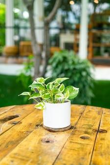 テーブルの上の植木鉢の花の装飾の斑点キンマ