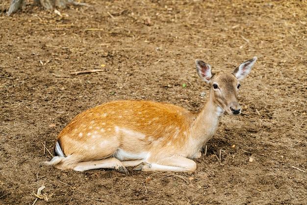 Spotted deer in park