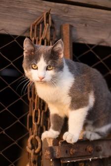 Пятнистый котенок на лестнице в заборе