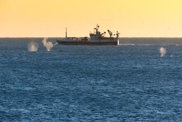 夕方にアイスランドの漁船の周りを泳ぐ3頭のクジラのスプレー
