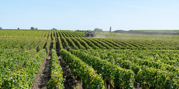 Spraying of grapevine in medoc bordeaux vineyard in france