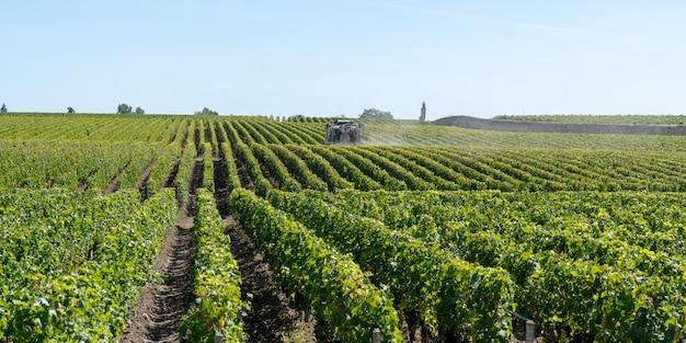 Опрыскивание виноградной лозы в винограднике medoc bordeaux во франции