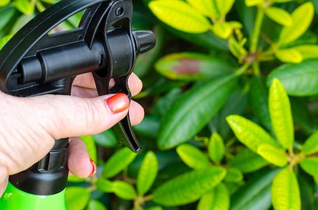 손 분무기로 질병과 해충으로부터 보호하기 위해 야채와 정원 식물에 살충제를 살포합니다.