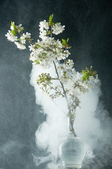 Sprig of cherry blossoms in smoke and water drops on black