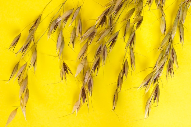 Sprig of oat and grain of oats on a yellow background