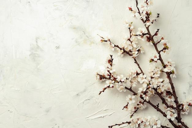 明るい石の背景に桜の花の小枝。