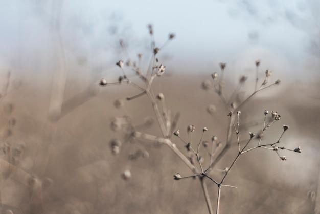 乾燥した植物の小枝。フラクタル幾何学