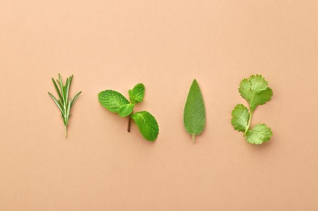 ローズマリーの小枝、ミントの葉、セージ、コリアンダーの色で分離