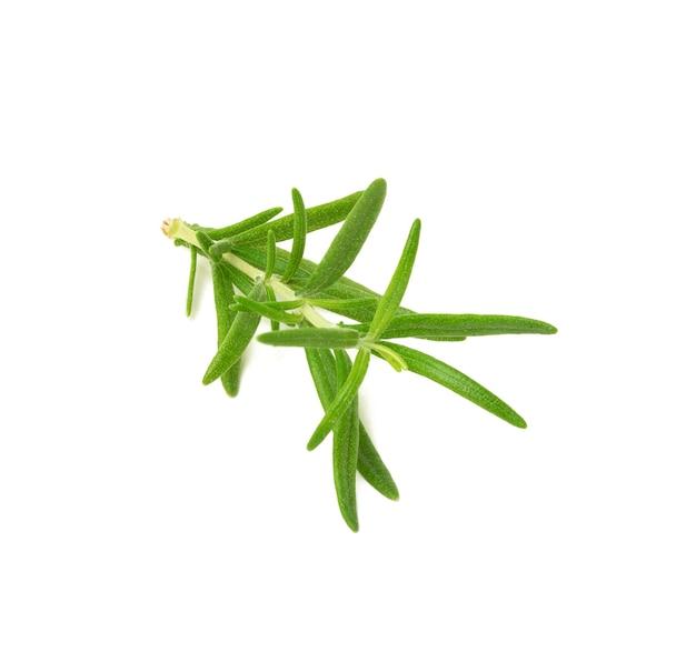흰색 배경에 분리된 녹색 잎이 있는 로즈마리, 고기와 수프를 위한 향기로운 향신료