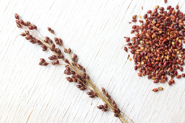 Sprig of red millet isolated on white