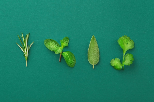 Sprig of rosemary, leave of mint, sage, cilantro isolated on colored