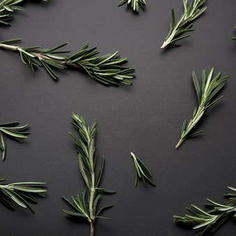 Sprig of rosemary spread on black background