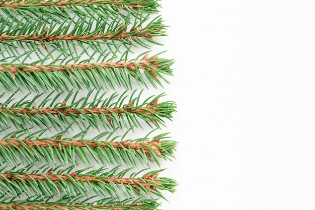 Sprigs of blue spruce lie horizontally in even rows on a white background.