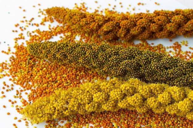 Sprigs of different varieties of millet