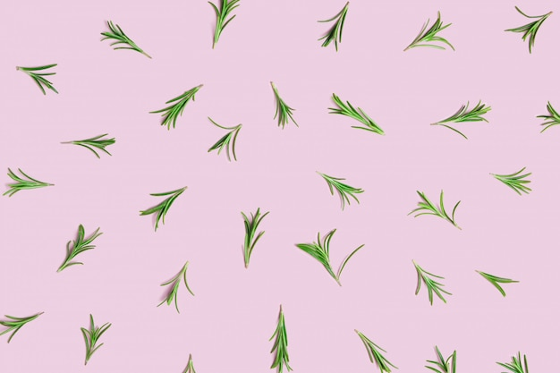 Sprigs of fresh green organic rosemary laid out on a pink pastel background