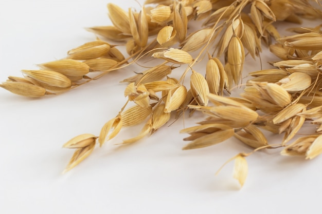 Sprigs of oats on a white background