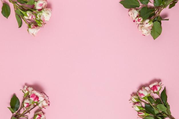 ピンクの背景に白と赤の小さなバラの小枝、コピースペース。ミニマルスタイルのフラットレイ。グリーティングカード、招待状。 3月8日、2月14日、誕生日、バレンタイン、母、女性の日のコンセプト