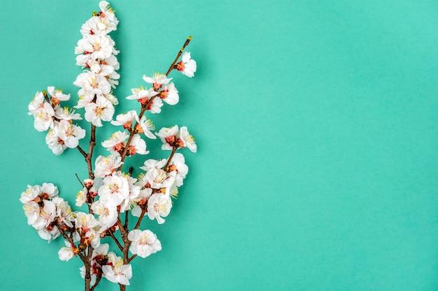 파란색 배경에 꽃과 살구 나무의 어린 가지
