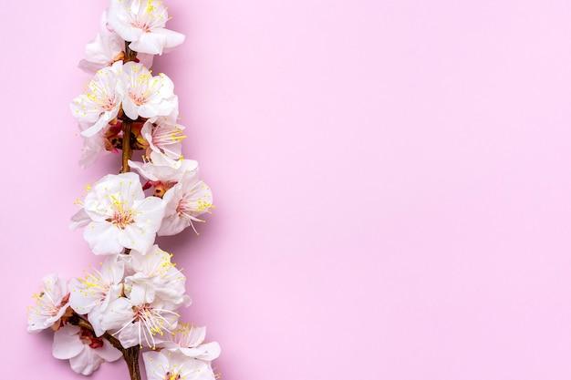 꽃과 살구 나무의 어린 가지