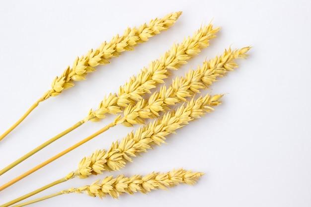 Веточки пшеницы