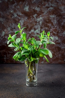Sprigs of young mint in a glass on a dark