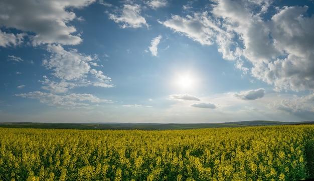 丘の上に大きな菜の花畑がある春の農業景観