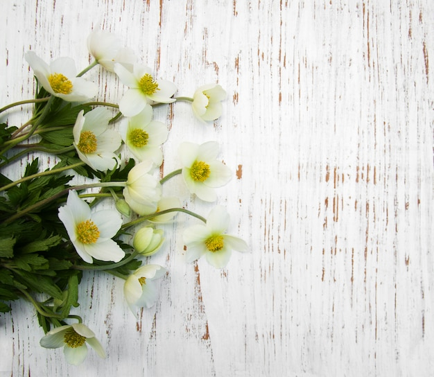 Spring anemone flowers