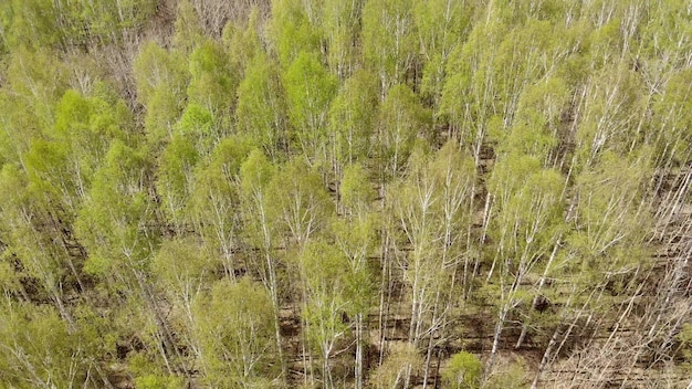 봄, 녹색 잎 주위에 꽃이 피었습니다. 녹색 아름 다운 젊은 나무. 공중 보기 숲입니다. 이 영상을 아마존 숲이나 다른 녹색 숲으로 사용할 수 있습니다.