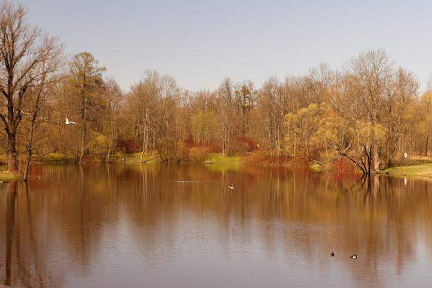 Весеннее пробуждение природы у пруда