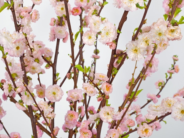 봄 배경. 핑크 벚나무 꽃, 흰색 배경에 부드러운 꽃. 플로랄 패턴. 부활절 개념