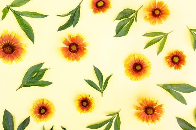 Весенний фон. обои на стену. многие желто-оранжевые цветы лежат на светлом фоне. цветочная композиция, плоская планировка.